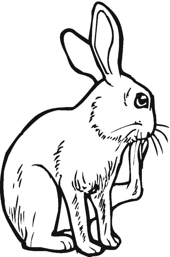 Big Footed Bunny Coloring Pages