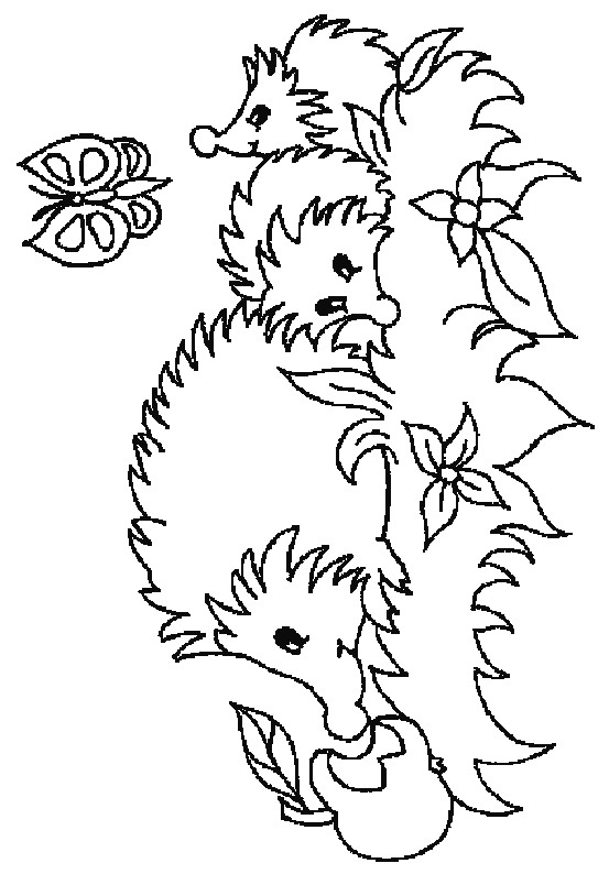 Butterfly and Hedgehog Coloring Page