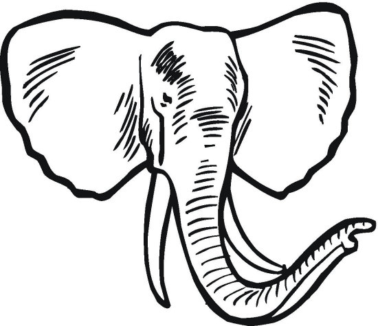 Elephant Drawing Color Elephant Tusk Coloring