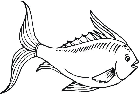 Fancy Fish Coloring Page