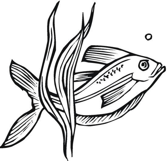Fish and Plant Coloring Page