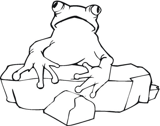 Frog and Rock Coloring Page