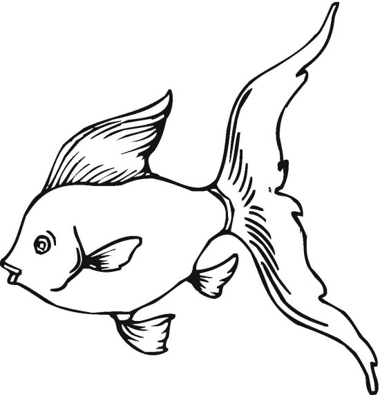 gold fish coloring page