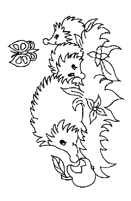 Hedgie Babies Hedgehog Pages