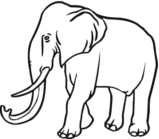 Elephant Ethnic Zentangle coloring page  Free Printable