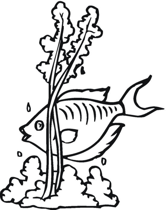 Seaweed and Fish Coloring Page