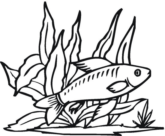 Tetra Fish Coloring Page