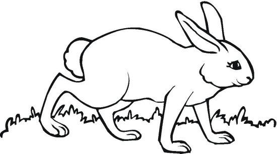 Missy Bunny Coloring Page