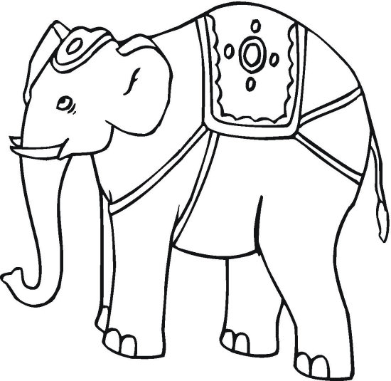 Elephant Coloring Pages  Color Book