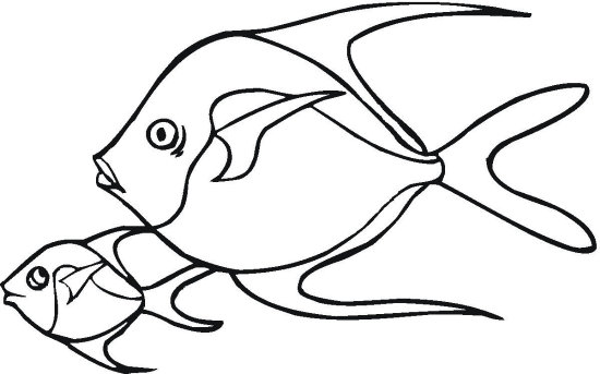 Skipper Fish Coloring Page