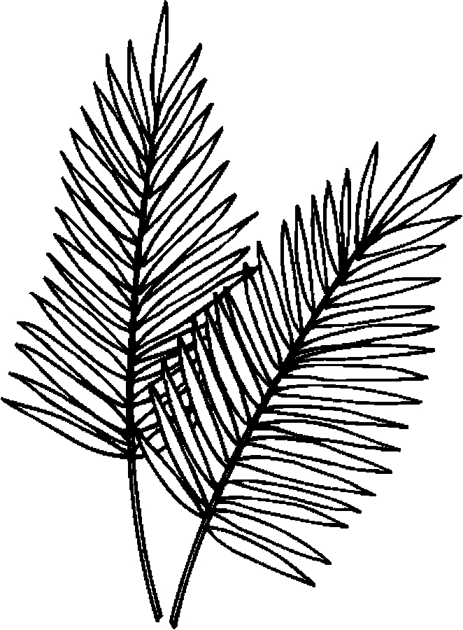 Palm Leaves Coloring Page Color Book
