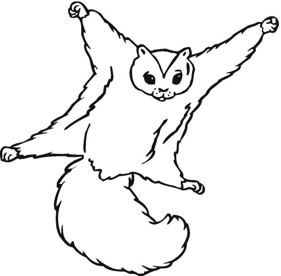 Squirrel Coloring Page - Color Book